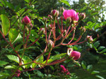 Rosenblüte im Herbst (Foto: Wolfgang Voigt)