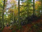 Im Klauser Wald (Foto: Wolfgang Voigt)