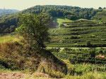 Weinanbau im Kaiserstuhl (Foto: Wolfgang Voigt)