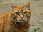 Katze (Foto: Wolfgang Voigt)