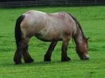 Pferd (Foto: Wolfgang Voigt)