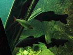 Aquarium (Foto: Wolfgang Voigt)