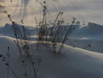 Stauden im Schnee (Foto: Wolfgang Voigt)