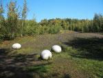 Deplatzierte Dinosaurier-Eier im Naturschutzgebiet (Foto: Wolfgang Voigt)