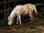Pony im GaiaZoo (Wolfgang Voigt)