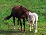 Pferde miteinander (Foto: Wolfgang Voigt)