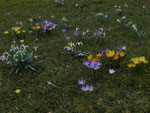 Frühling im Garten (Foto: Wolfgang Voigt)