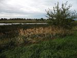 Feuchtgebiet bei Siersdorf (Foto: Wolfgang Voigt)