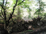 Totholzsperre gegen Mountainbiker (Foto: Wolfgang Voigt)