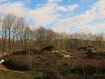 Holzernte = Zerstörung naturnaher Lebensräume