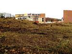 Totalkahlschlag - Neupflanzungen sind laut der Technischen Beigeordneten nicht vorgesehen...