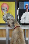 Interesse an Kunst ...oder Hühnern?
