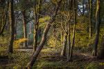 Wald bei Hemmingen / Region Hannover
