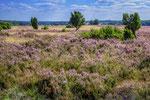 Heide bei Niederhaverbeck #4
