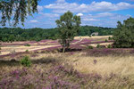 Heide bei Niederhaverbeck #1