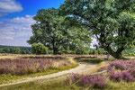 Heide bei Niederhaverbeck #3