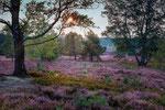 Heide bei Undeloh #2