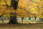 Tiergarten Hannover #1