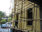 Bambus zum bauen
