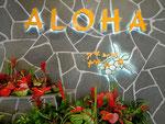 Aloha - Hallo