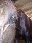 Abceso corneal en la parte ventral de la cornea