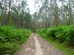 Typische Eukalyptuswälder