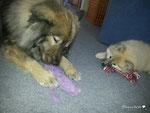 Gemeinsam spielen ...