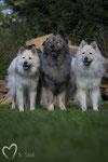 Lucy, Teddy und Lea