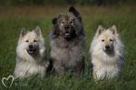 Aurea-Lucy vom Bärenstern, Teddy und BasiLea vom Schmetterlingsgarten