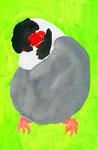 """""""桜文鳥""""  watercolor,paper 10×14.8cm"""