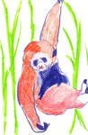 """""""テナガザル""""  colorpencil,paper 10×14.8cm"""