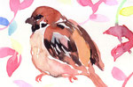 """""""雀""""  watercolor,paper 10×14.8cm"""