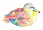 """""""カモ""""  watercolor,paper 10×14.8cm"""