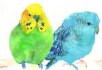 """""""セキセイインコとサザナミインコ""""  water color,paper 10×14.8cm"""