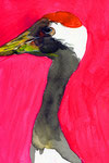 """""""タンチョウ""""  water color,paper 10×14.8cm 2015"""