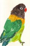 """""""キエリクロボタンインコ""""  watercolor,paper 10×14.8cm"""
