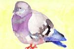 """""""鳩""""  watercolor,paper 10×14.8cm"""