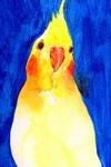 """""""オカメインコと青""""  water color,paper 10×14.8cm 2015"""