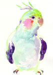 """オカメインコ""  water color,paper 10×14.8cm"
