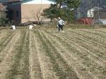 植える前の圃場