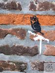 Mauervogel