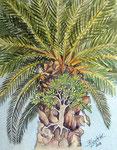Teneriffa, Palme und Ficus, Tusche+Aquarell, 32x24, 2018
