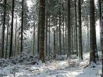 Winterwald im Taunus (c)D. Saul 2012