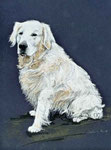 """Golden Retriever"", Pastell 23x32,5cm, (c)D.Saul 2012"