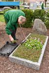 Die Bepflanzung für den Platz von curaflora wird entfernt