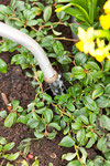 Wassertank über die Eingießöffnung auffüllen