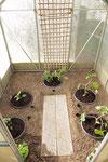 fertig, damit sind die Pflanzen bestens versorgt