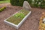 Grab ohne curaflora, mit deutlich höherem Pflege- und Gießaufwand