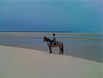 Equitation en Baie de Somme