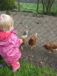 Das Käferchen beim Hühnerfüttern